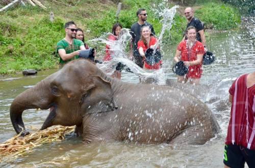 Elephant Sanctuary Thailand Tara Richter